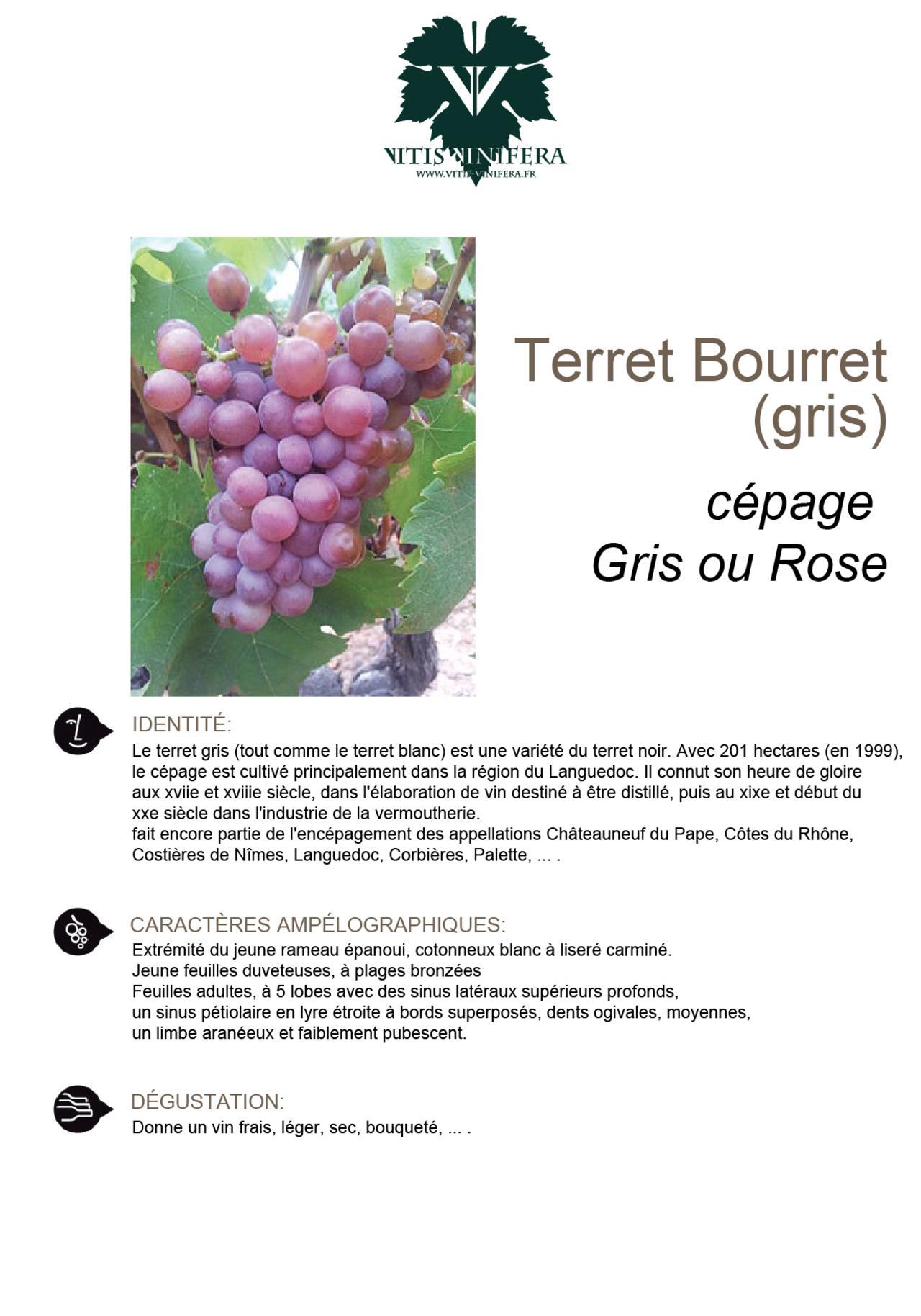 CÉPAGE - TERRET BOURRET