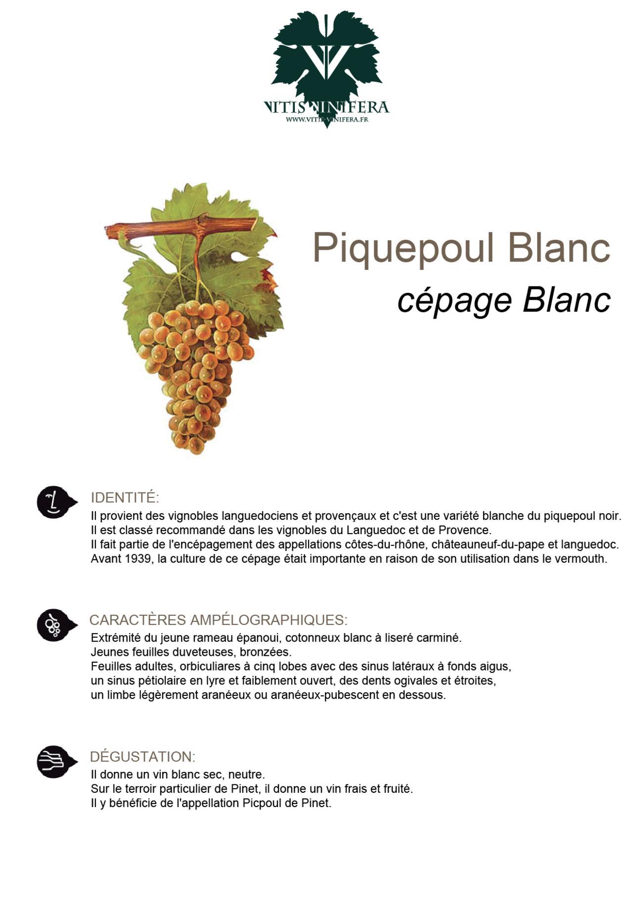 CÉPAGE - PIQUEPOUL BLC