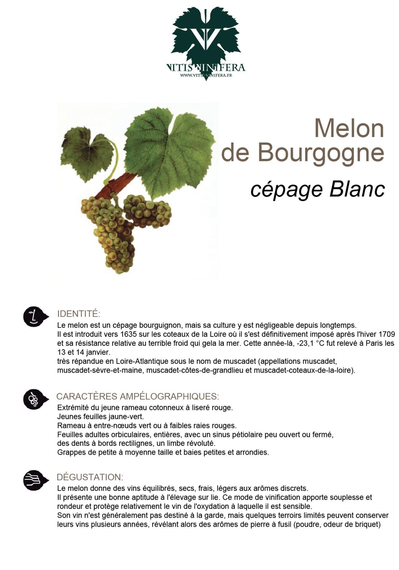 CÉPAGE - MELON