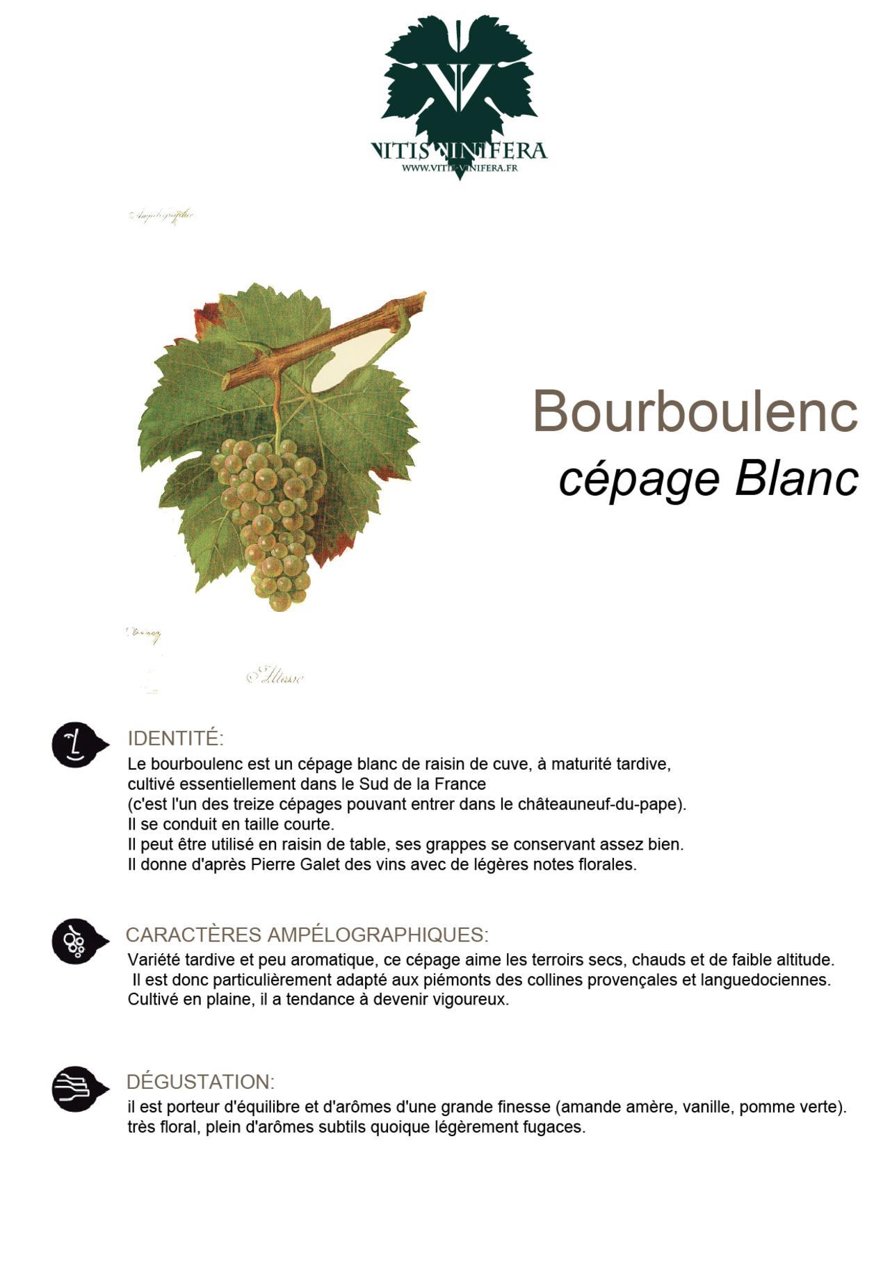 CÉPAGE - BOURBOULENC