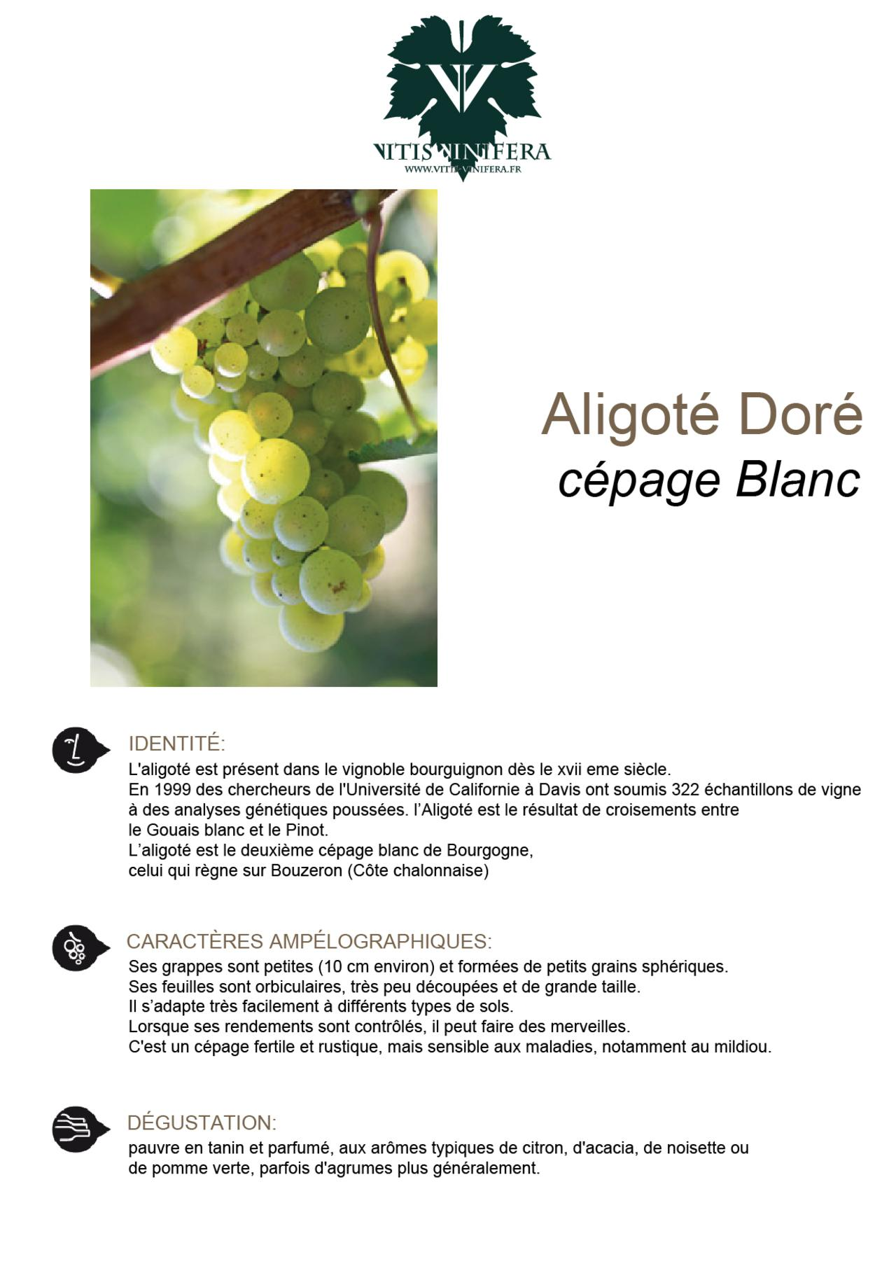 CÉPAGE - ALIGOTÉ