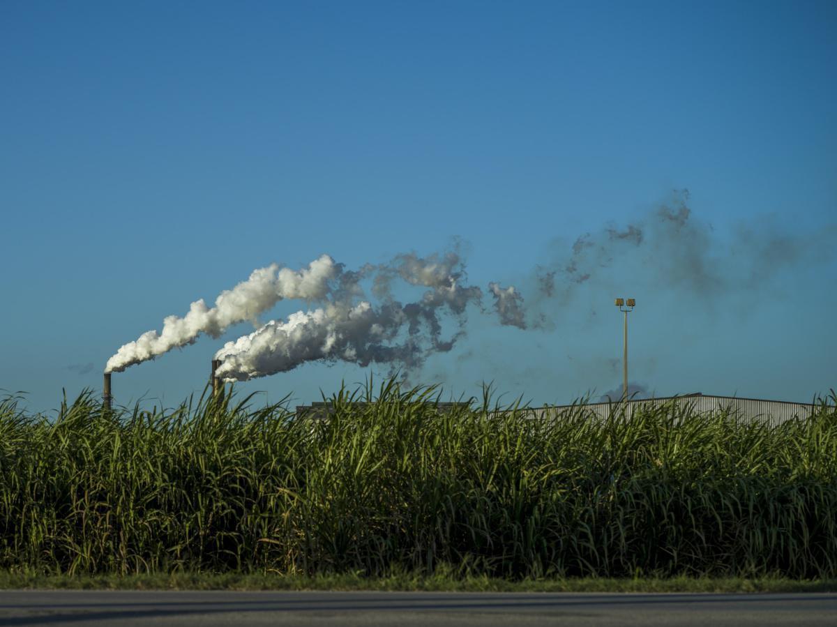Polluants Organiques Persistants