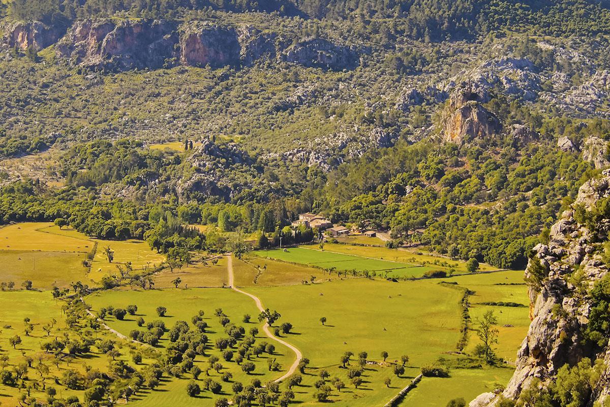 Orient Valley