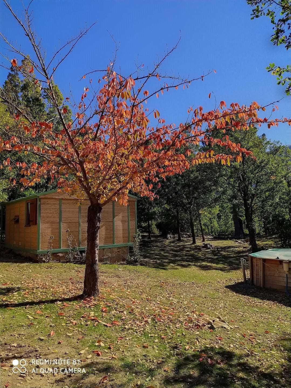 Chalet et Lodge de Caralba - Ghisoni
