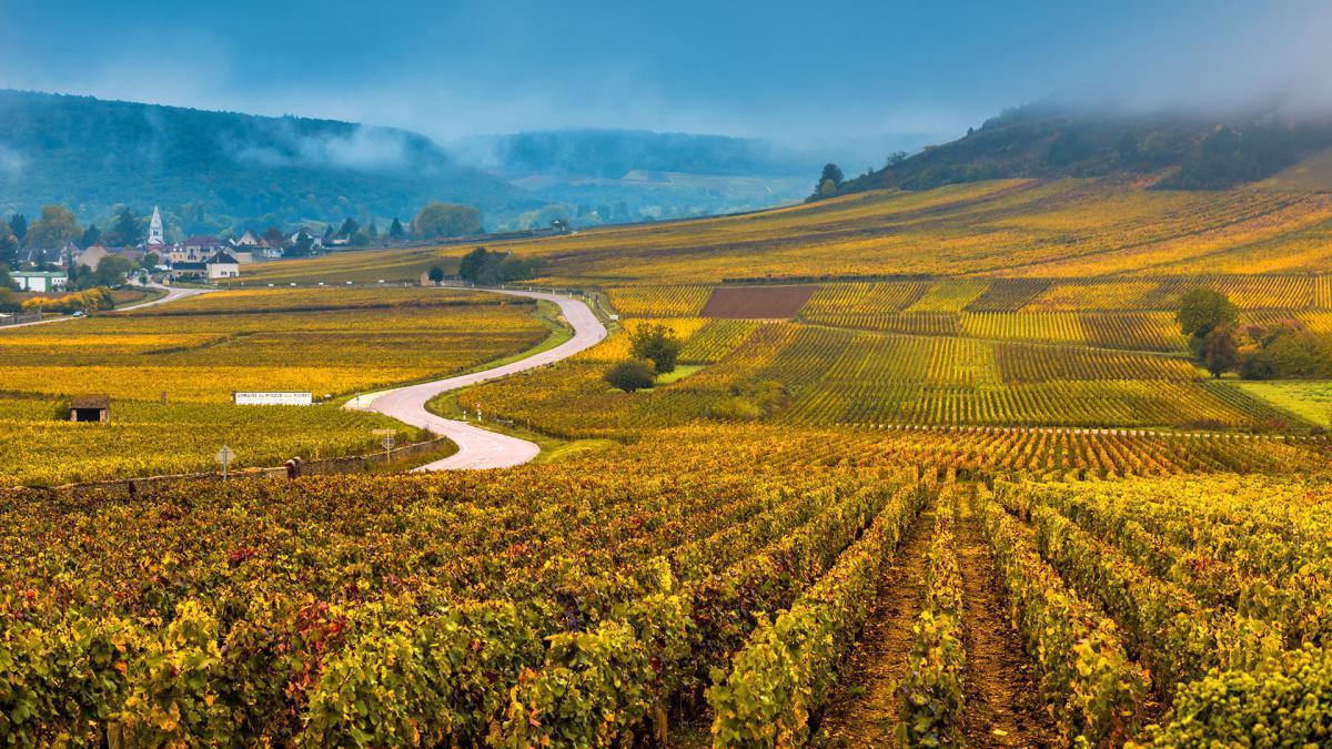 Les vignobles de Bourgogne avec BURGUNDY Emotions