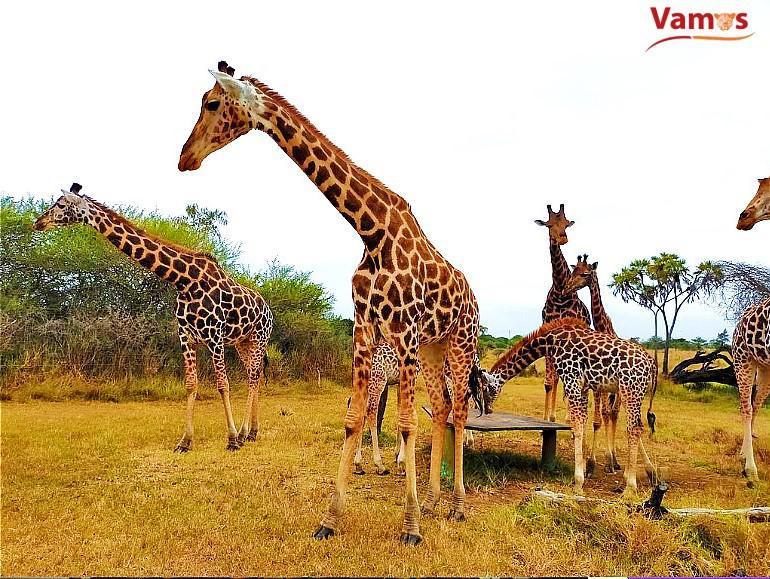 Explore Nguuni Sanctuary