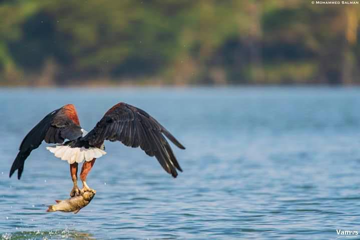 Bird watch at Lake Naivasha