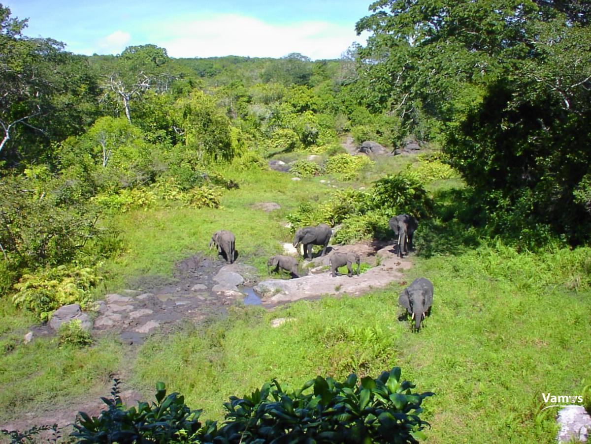 Visit Shimba Hills National Reserve