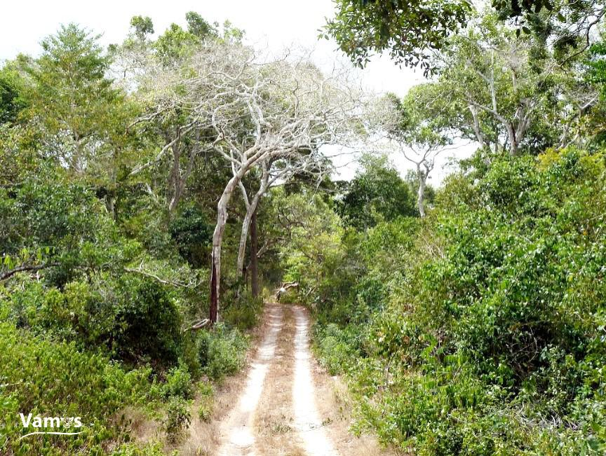 Arabuko Sokoke Forest
