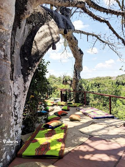 Beneath the Baobabs
