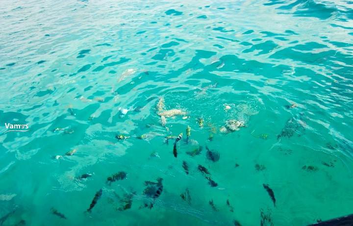 Marine National Park - Malindi