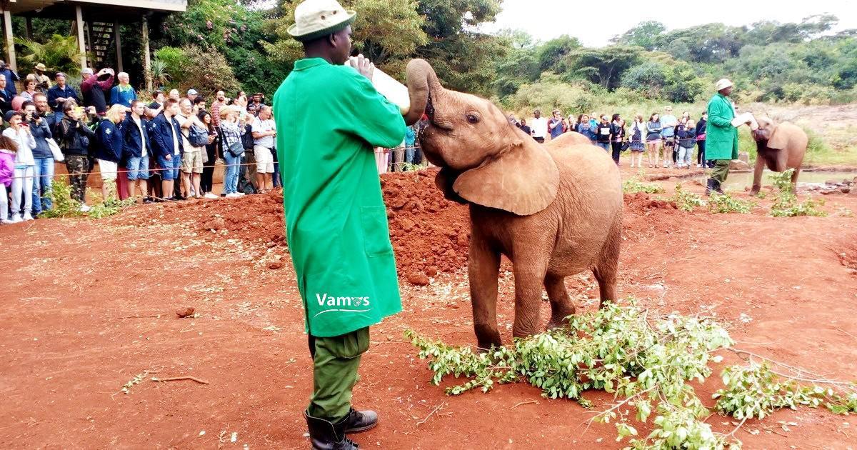 David Sheldrick Elephants Orphanage