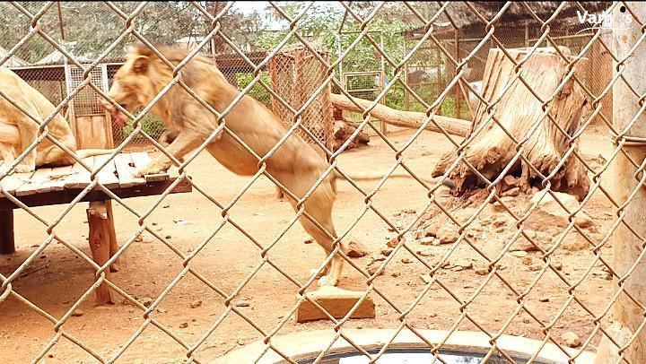 Nairobi Animal Orphanage
