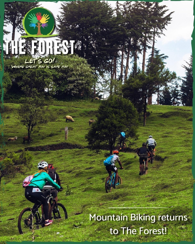The Forest - Kereita Forest