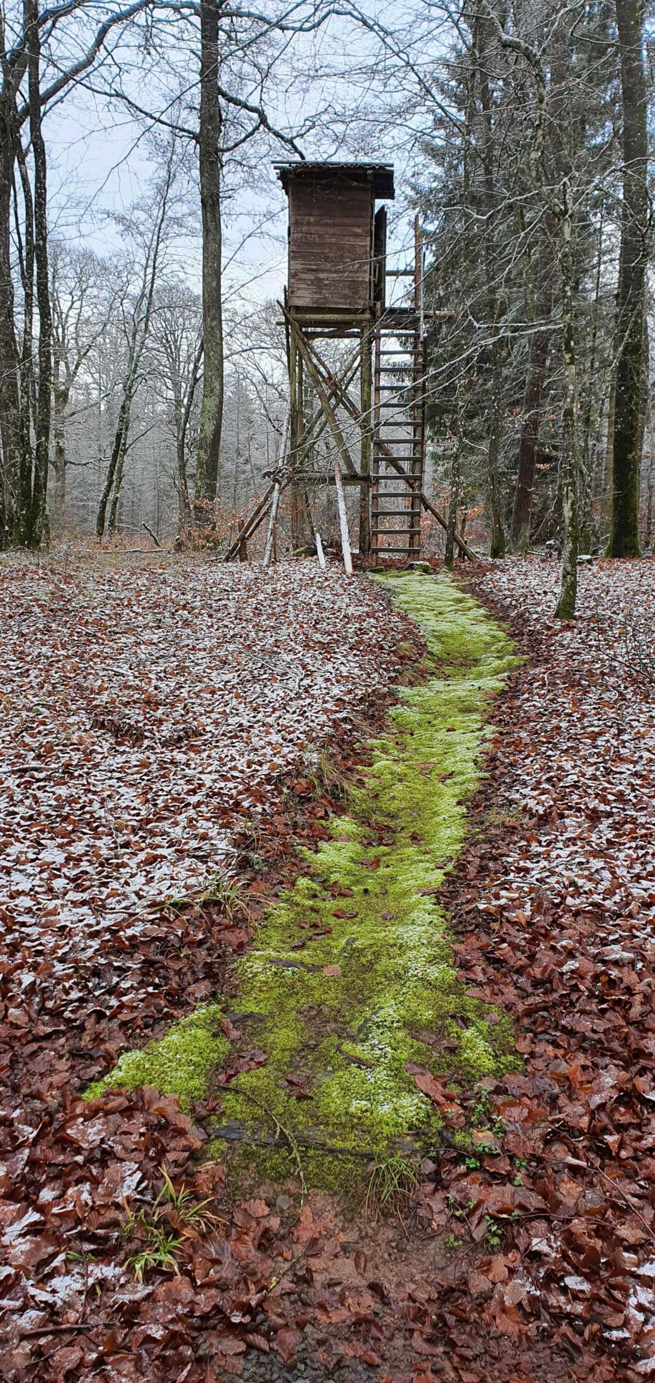 Gerolsteiner Winter Wald am 1. Weihnachtstag
