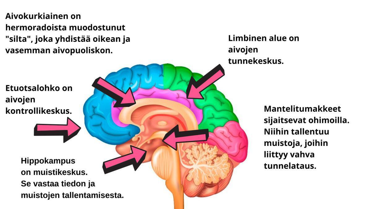 Tunne omat aivosi