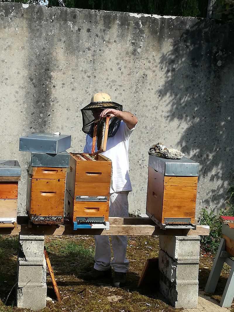 Le rucher de Châtillon sur Morin