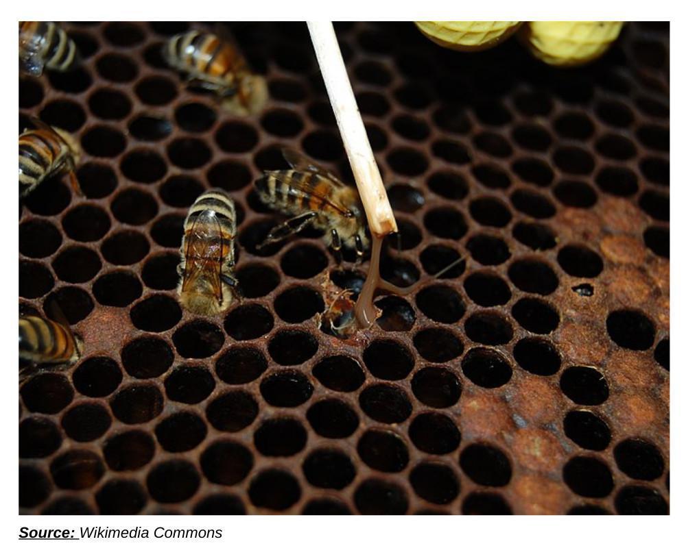 La déclaration de ruches - Pourquoi et comment la réaliser ?