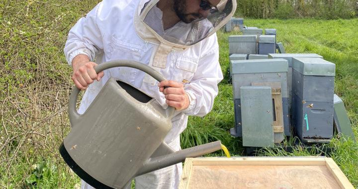 Formation Santé de l'abeille : L'hivernage