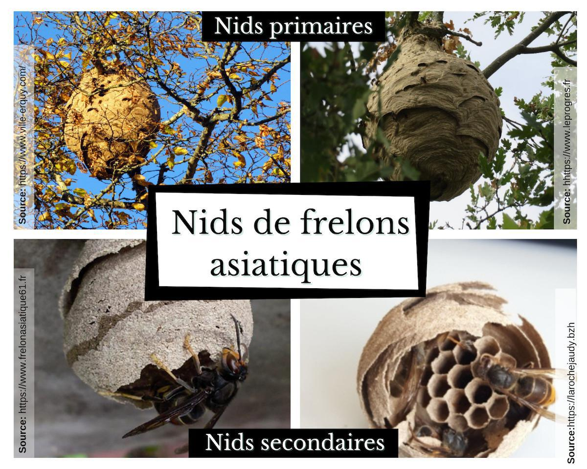 Comment reconnaitre un essaim d'abeilles ?