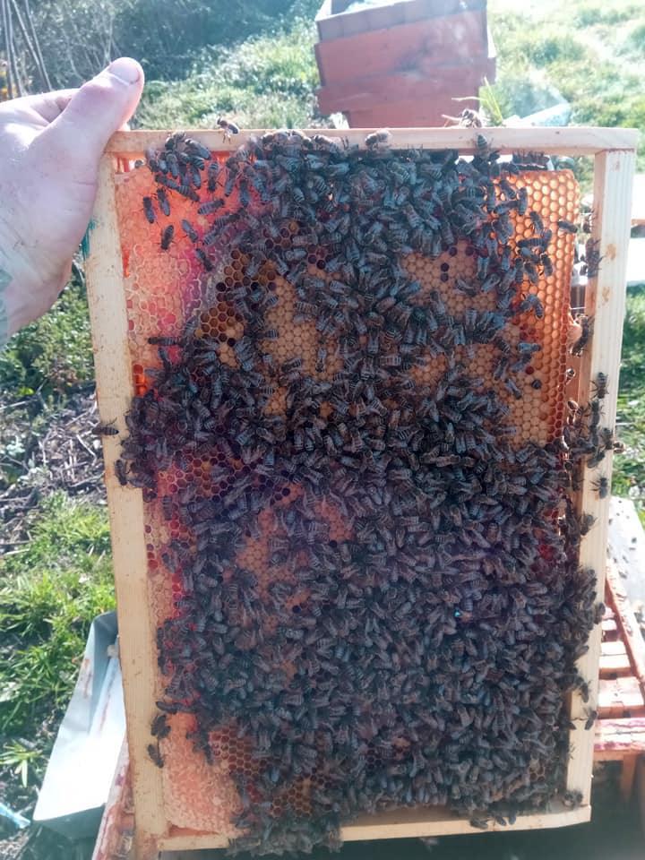 Le rucher de Noyette
