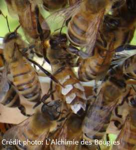 Qu'est ce qu'une abeille ?