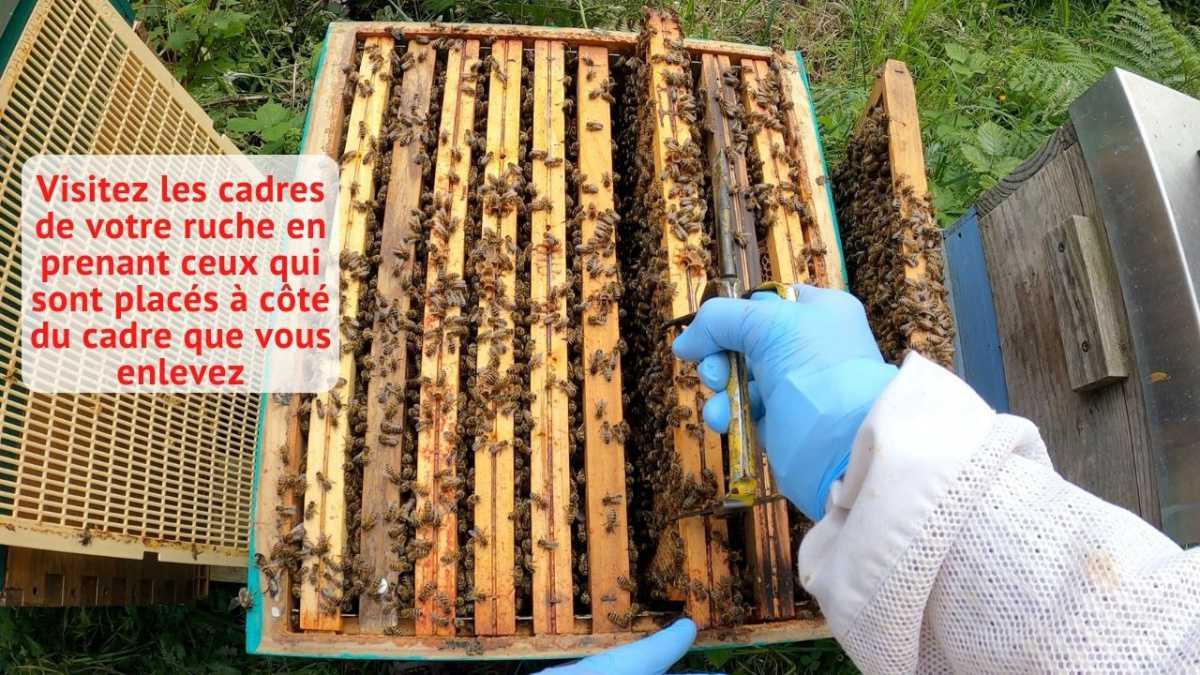 Comment retirer et replacer un cadre dans une ruche ?
