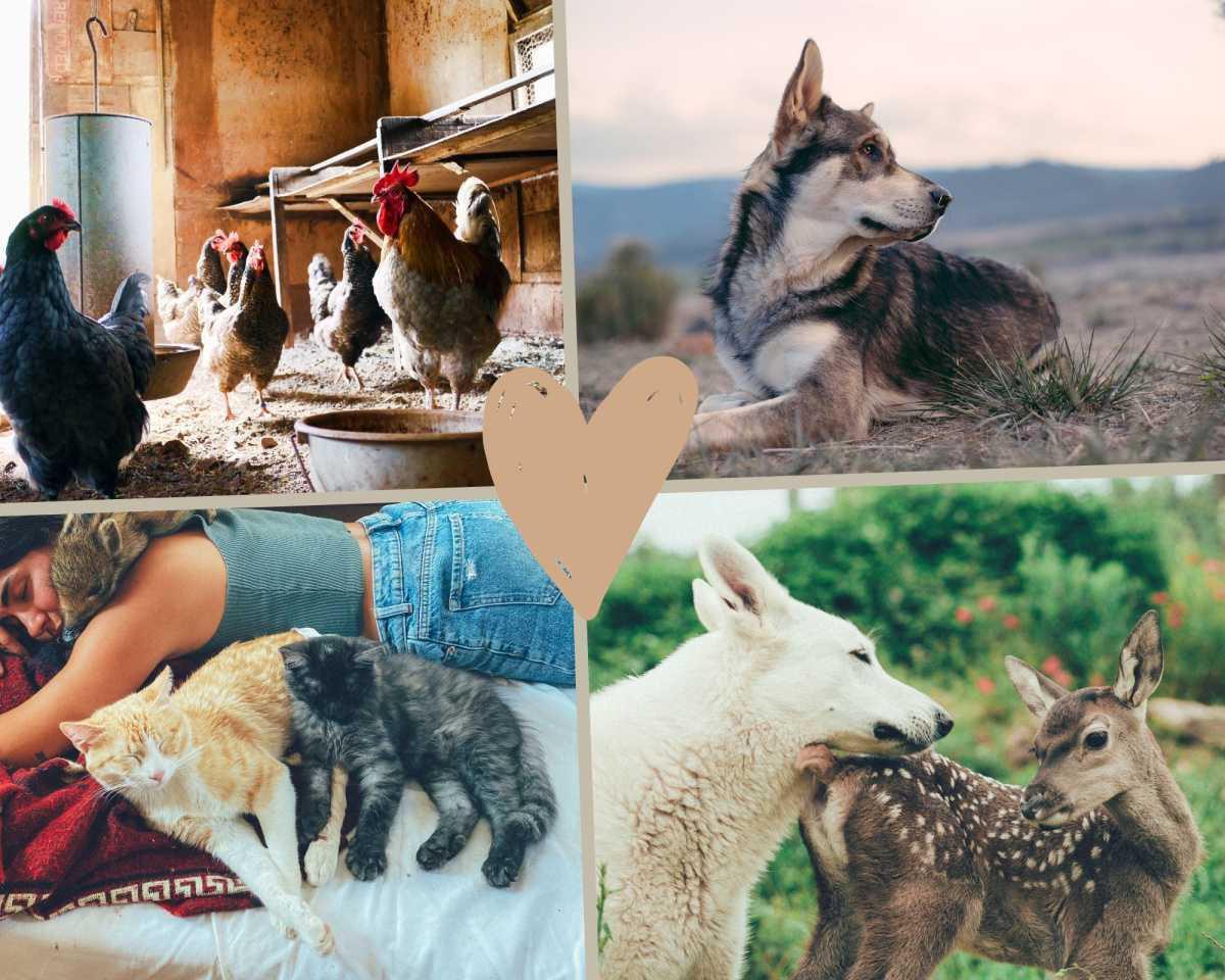 Otros animales domésticos