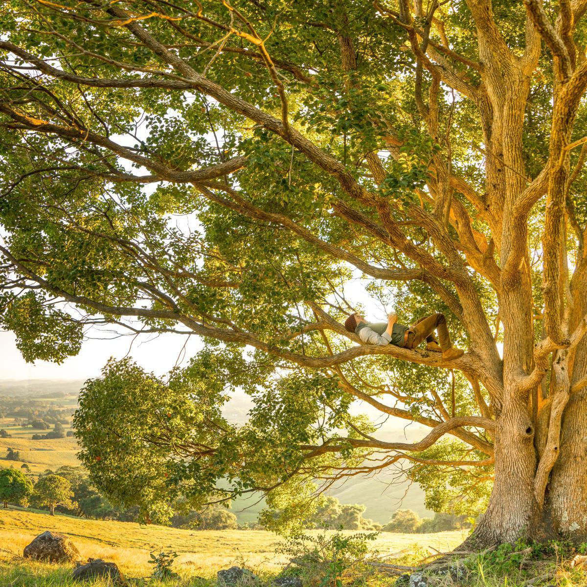 Santé durable & Naturopathie