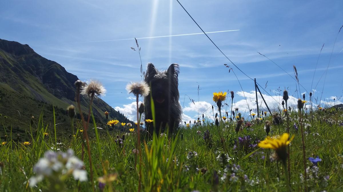 Hundeferien in Arosa