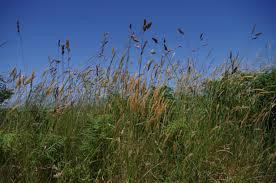 """""""Mauvaises herbes""""? pas tant que cela ! ..."""