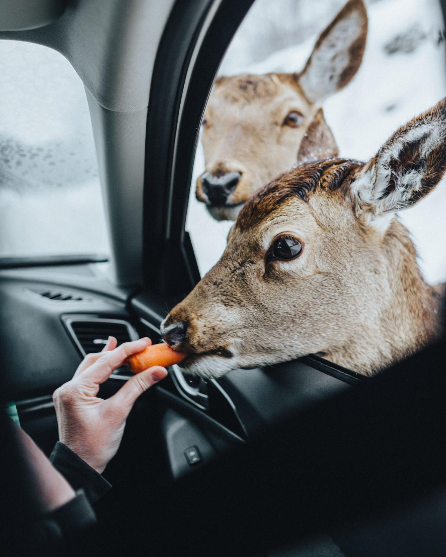 Unser Umgang mit Tieren