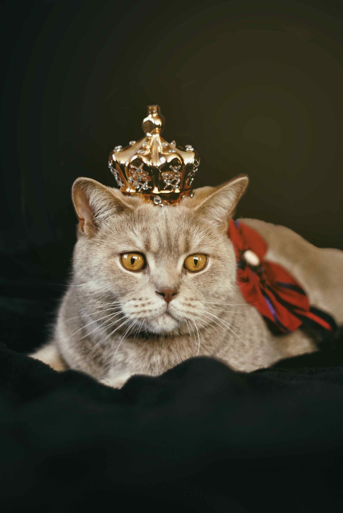 Der weise Herrscher