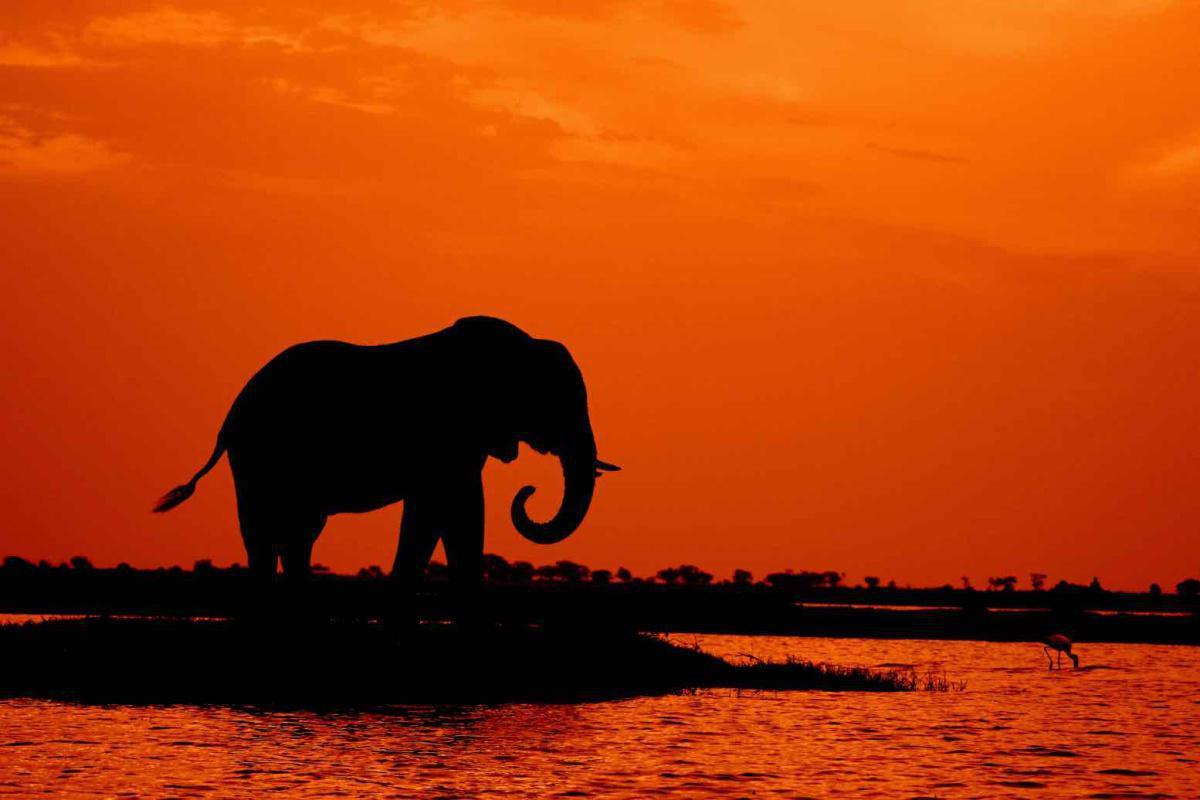 Die Wahrheit über Elefanten