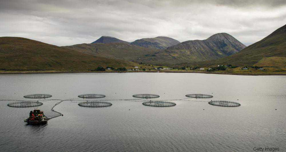 New report highlights the costly damage involved in the international Salmon farming industry