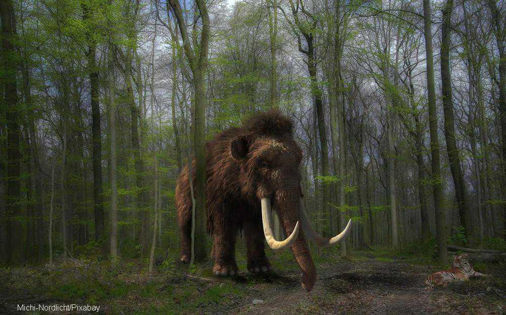 From dawn 'till tusk: Oldest DNA ever discovered belongs to a woolly mammoth
