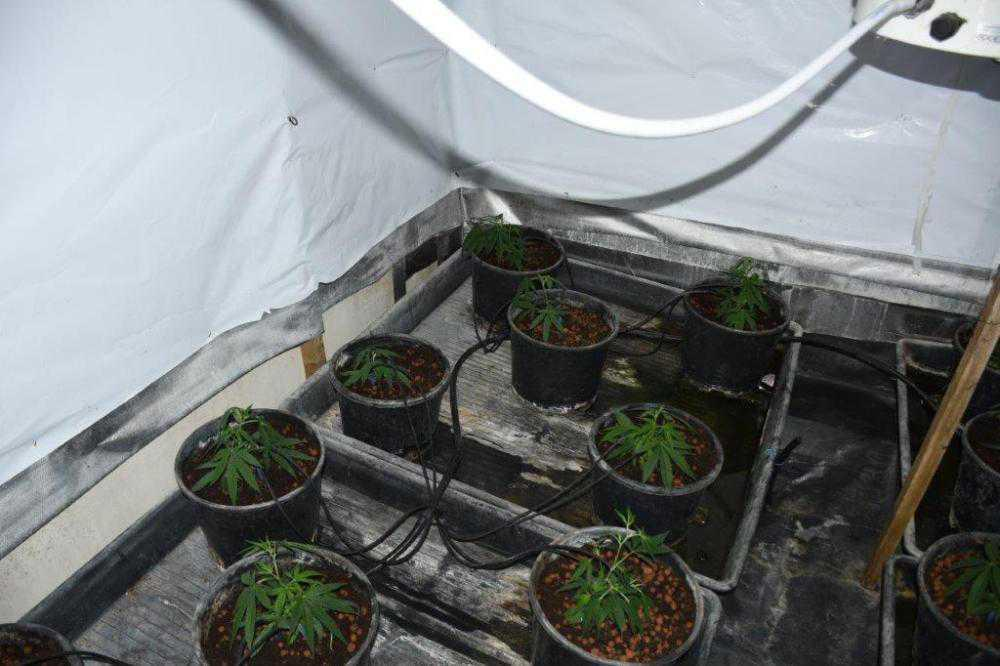 €90,000 cannabis seized and one man arrested in Dundalk