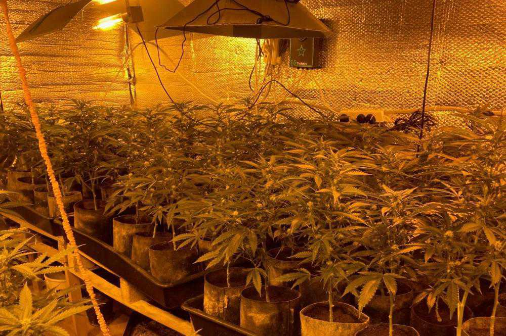 Man due in court after cannabis plants seized in Co Monaghan