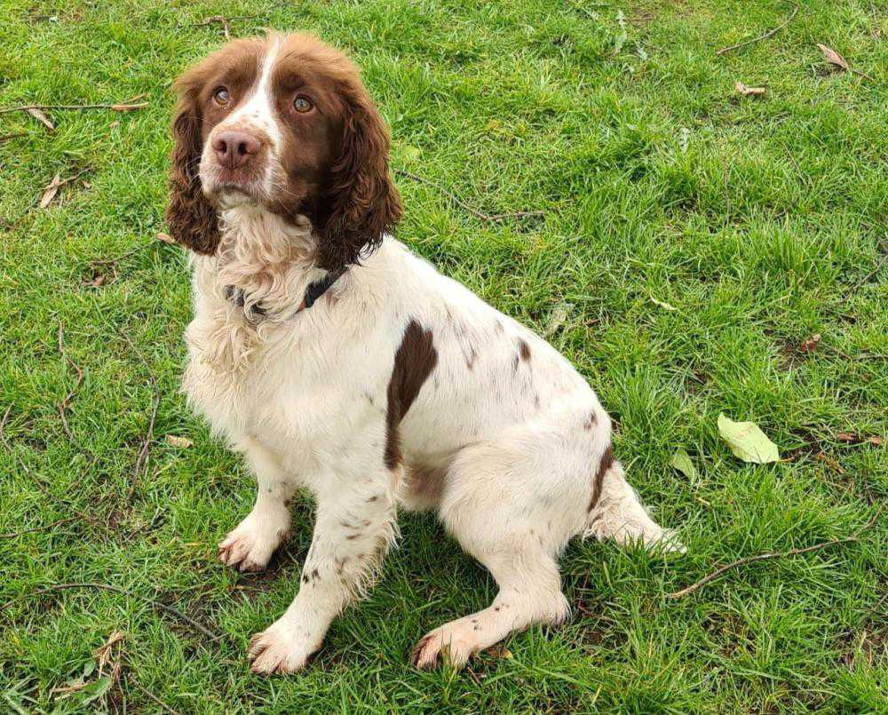 Garda dog helps seize €17,500 of cocaine in Limerick