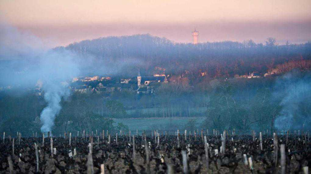 Early spring frost destroys most of France's grape harvest