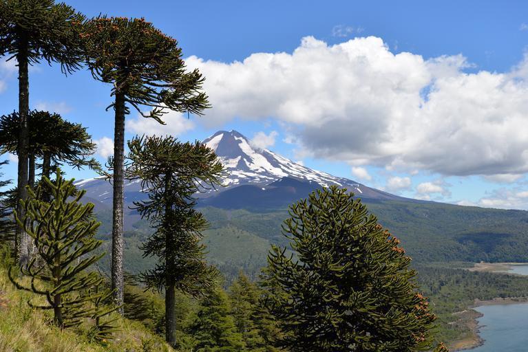 Parque Nacional Lanín