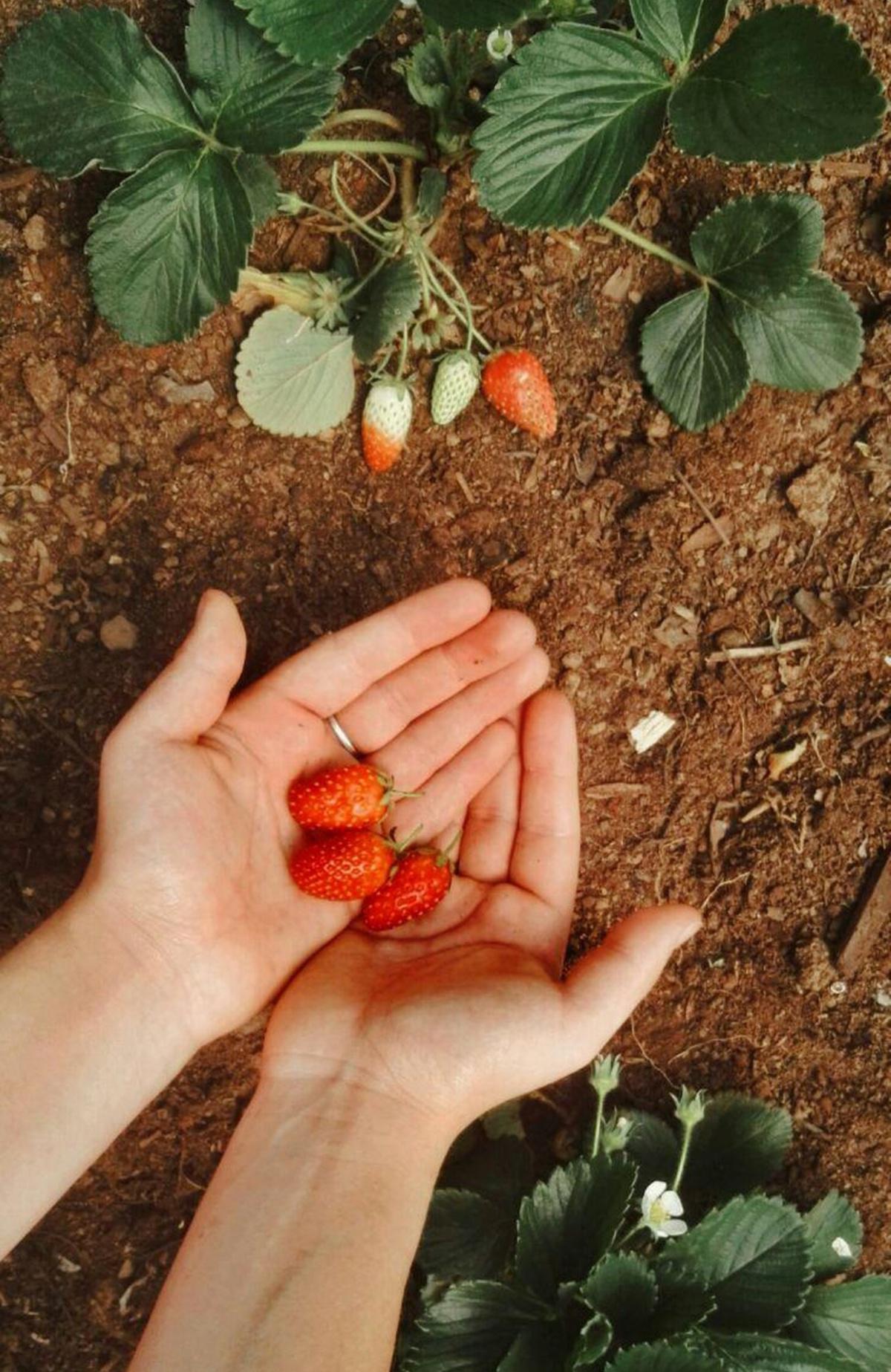 Jardiner, c'est cultiver notre âme !