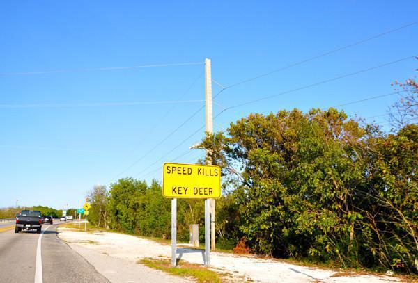 Die Florida Keys - Ausflugstipps