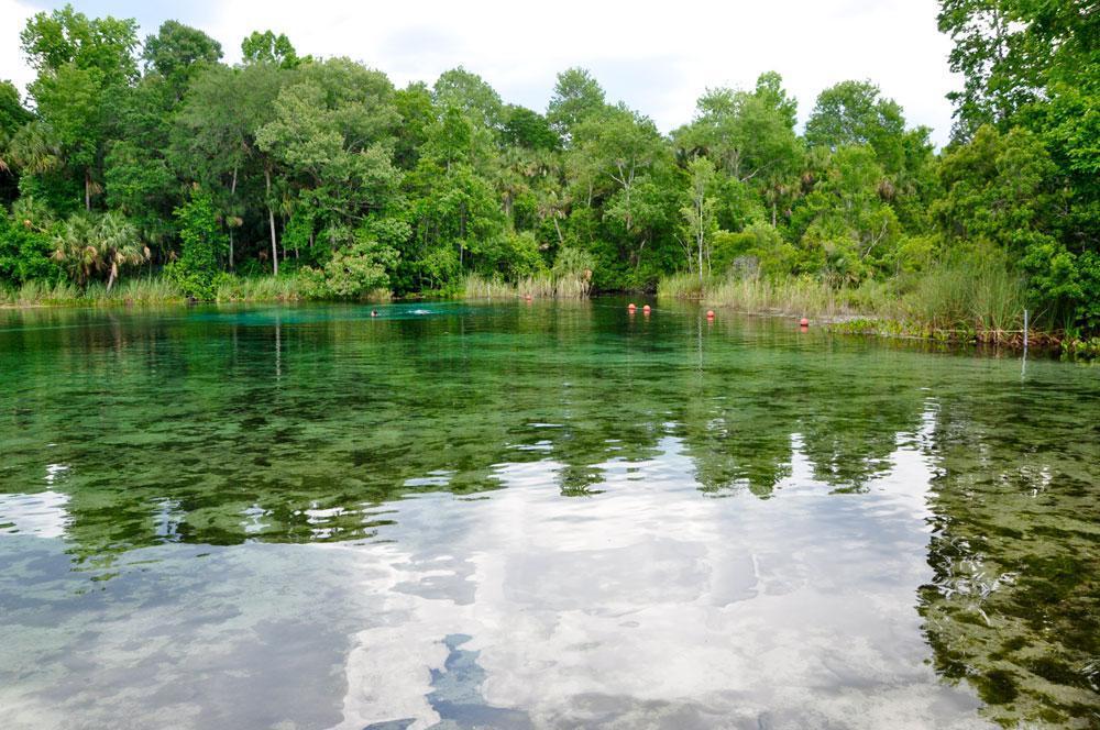 Quellen im Ocala National Forest bestaunen