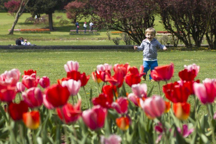 Parco Sigurtà: la fioritura dei tulipani