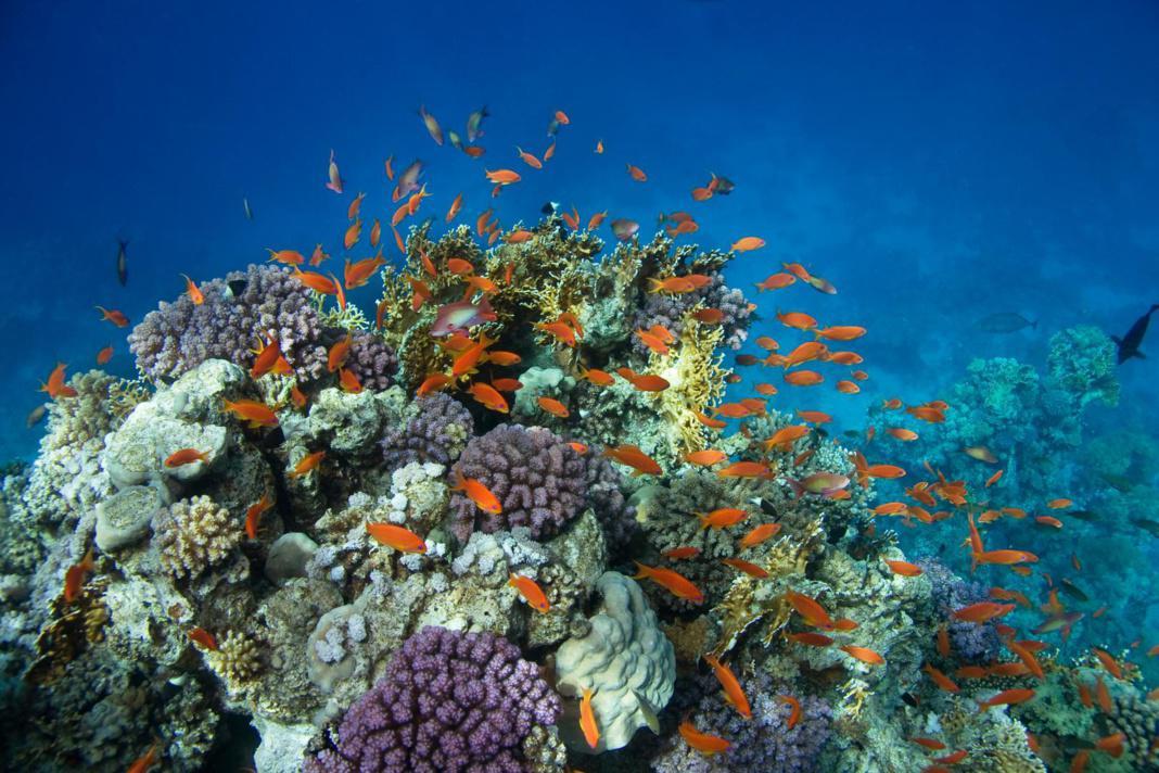 La plongée sous marine en Guadeloupe