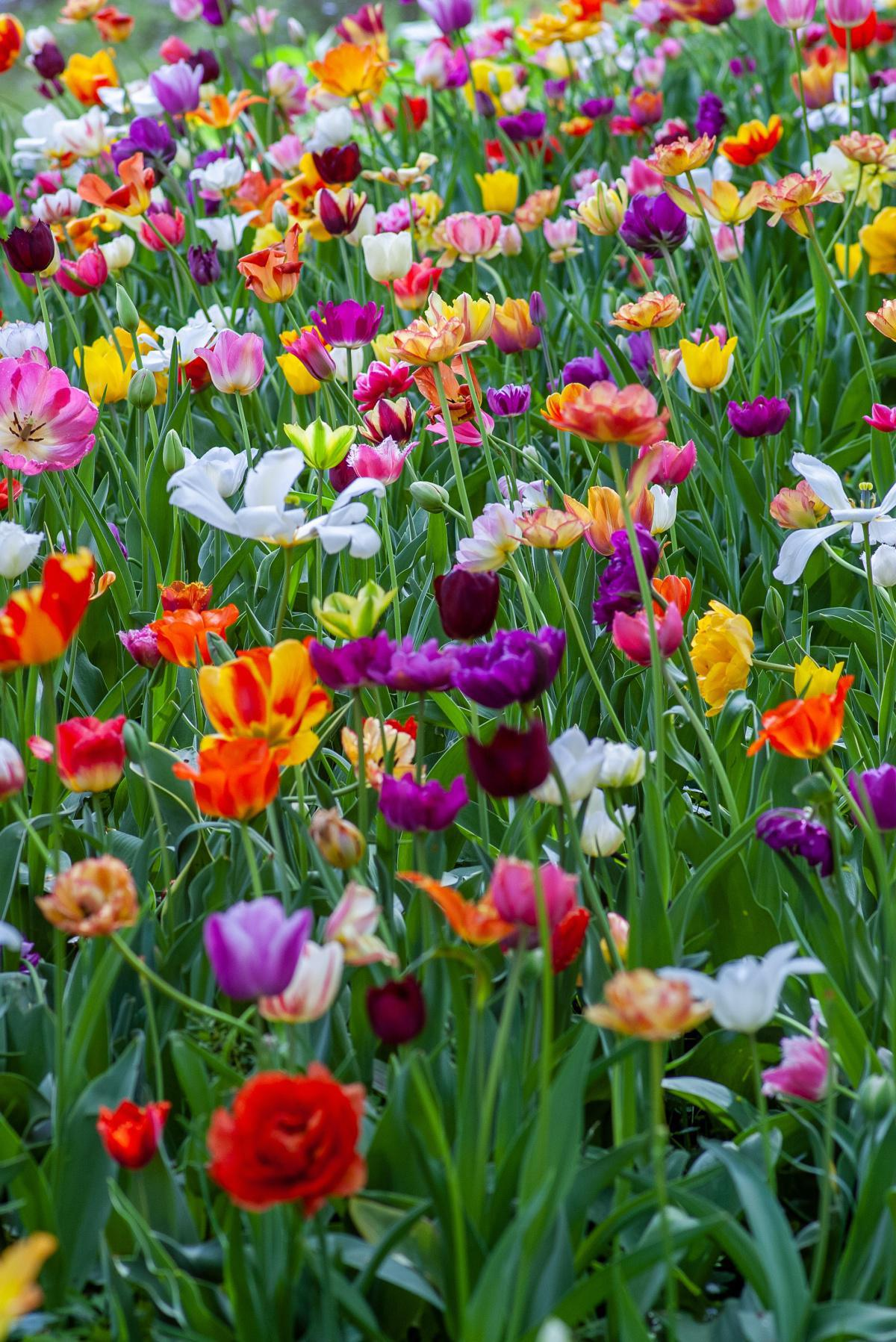 Les légumes de saison au mois de mars