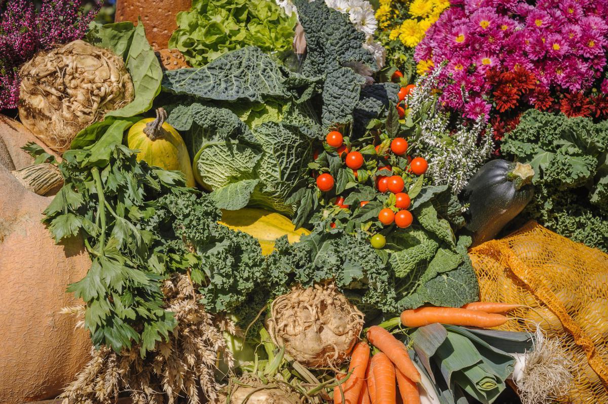 Les légumes de saison au mois de Novembre
