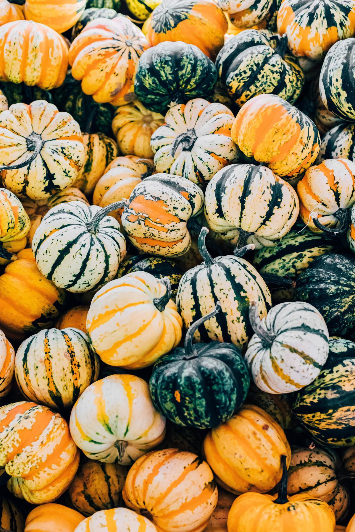 Les légumes de saison au mois de septembre