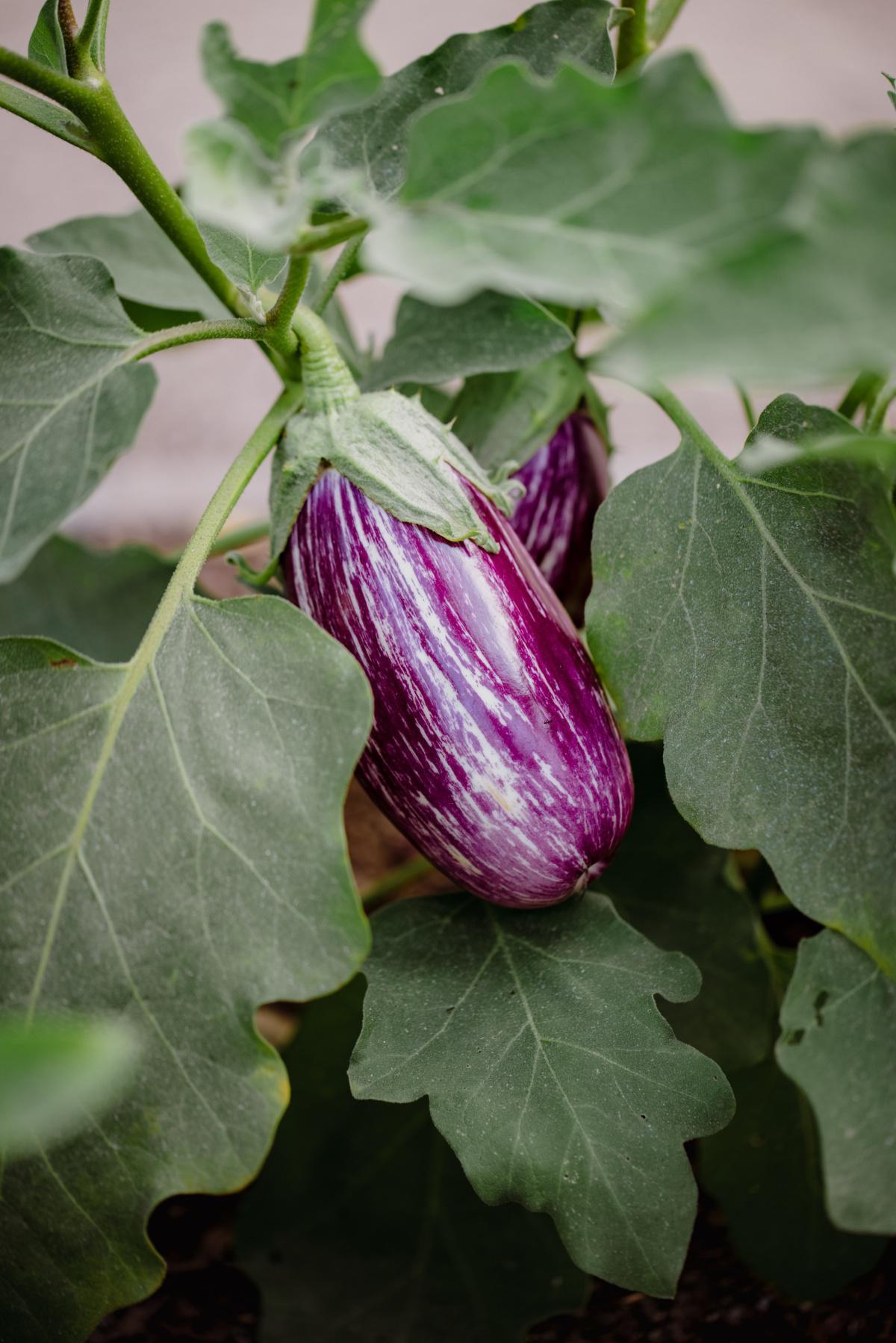 Les légumes de saison au mois de juillet